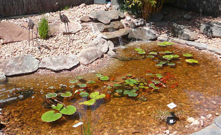Water features ponds adelaide south australia installed for Concrete garden pond