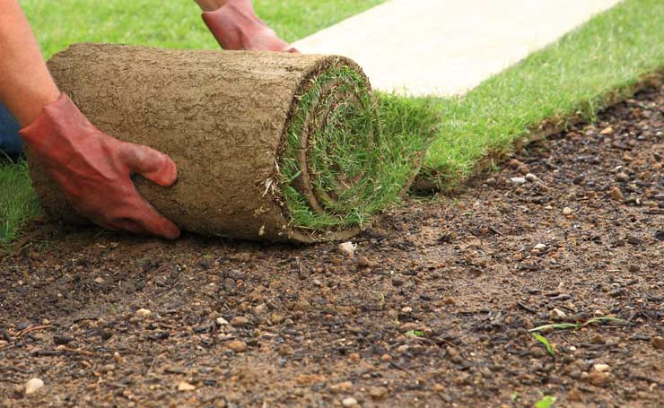 Landscaping Grass Roll : How to lay instant roll out lawn diy step by guide