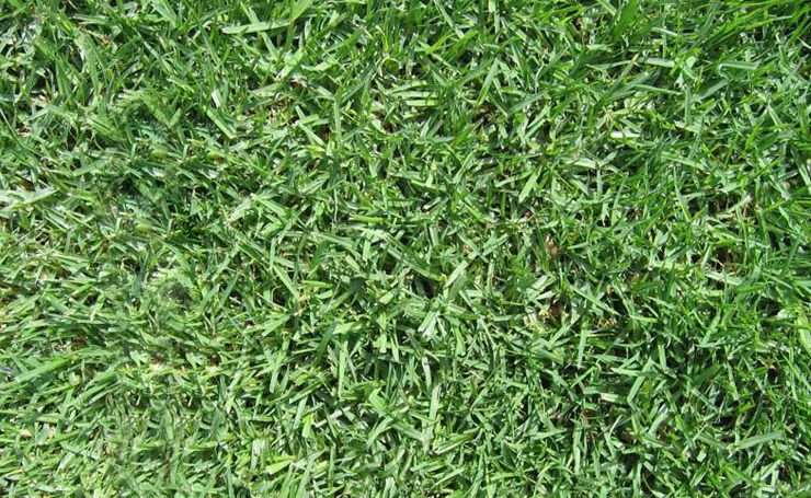Roll Out Instant Lawn Types For Adelaide Gardens