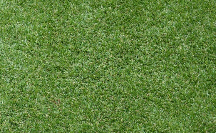 Manicured Synthetic Grass