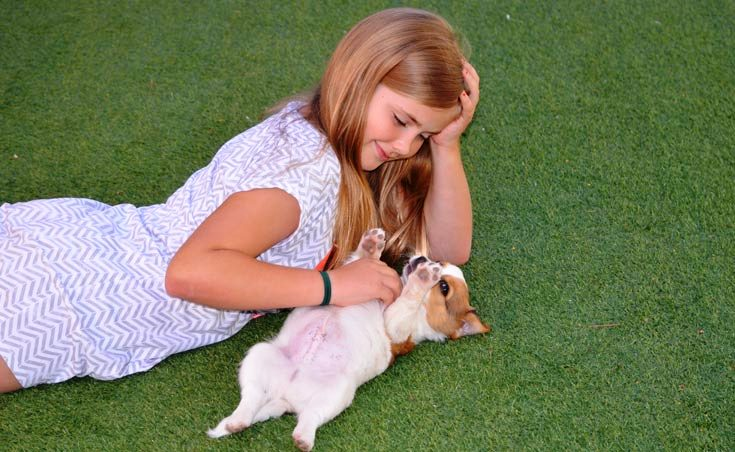 Landscaping Ideas For Dog Owners