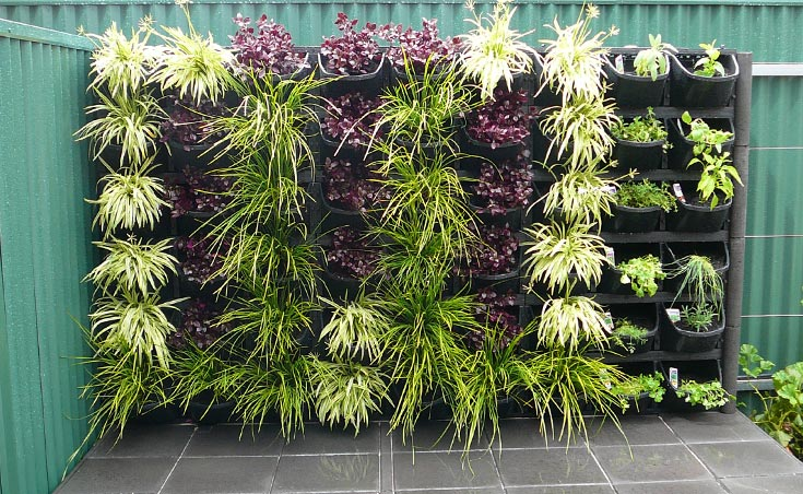 Vertical gardens adelaide feature walls for small gardens for Garden trees adelaide